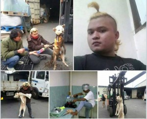 Undocumented Indonesian arrested for killing and eating a dog