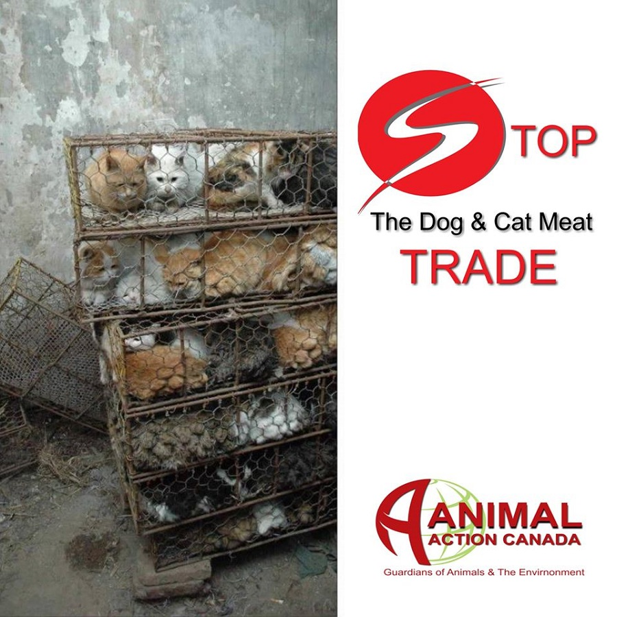 dog meat trade While most westerners view dogs strictly as companion or working animals and find the practice of raising and slaughtering dogs for food strange and unsettling, a large number of people in south korea as well as in china, vietnam, and.