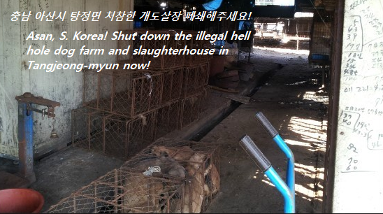 Petitions - Stop the Dog and Cat Consumption in S. Korea! - photo#32