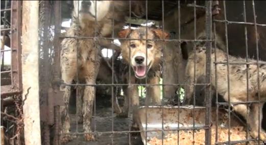 개농장 주인이 뜬장을 치우지 않아 개들이 배설물로 뒤범벅 돼 있다./사진제공=동물사랑실천협회