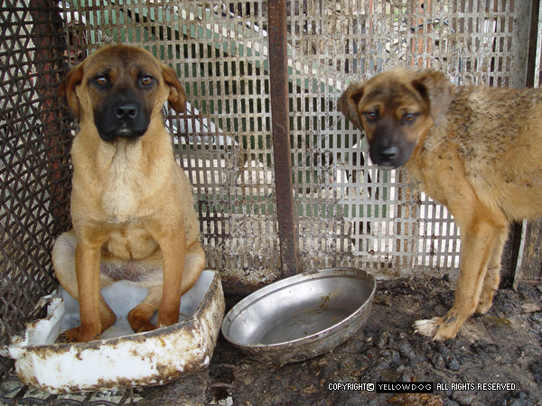 Petitions - Stop the Dog and Cat Consumption in S  Korea!