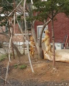 Dog hanging at Hot Pot Dog Meat Restaurant in Incheon 가마솥 보신탕집