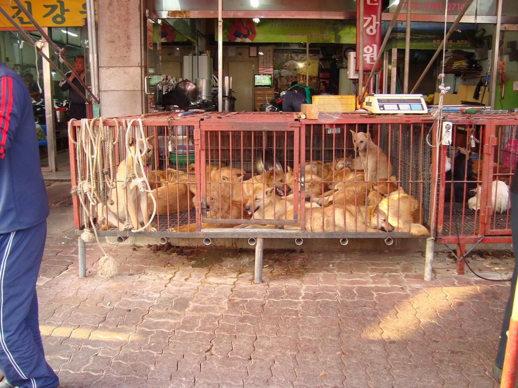 Korean Market Cats Dogs