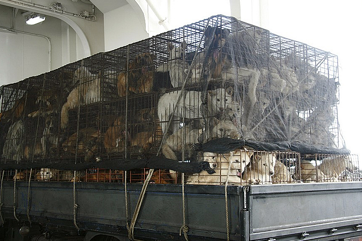 Stop the Dog and Cat Consumption in S. Korea! | Stop the Dog and Cat Consumption in S. Korea!