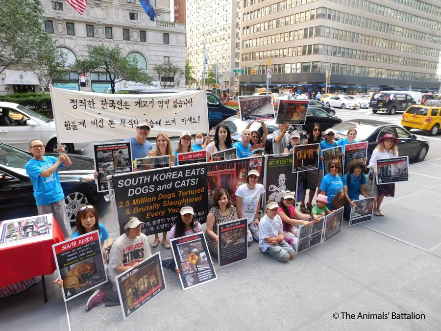 Thank you, The Animals' Battalion for giving a voice to the animals of South Korean Dog and Cat Meat Trade!!! Day 2 Demonstration: July 23, 2015. Photo: The Animals' Battalion.
