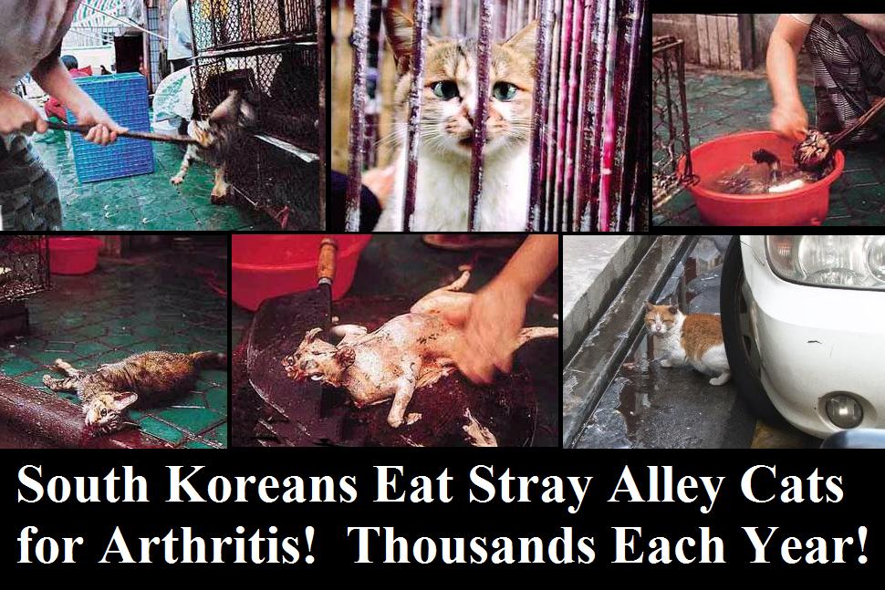 image gallery korean eating cat