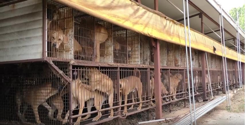 Photo: The Korea Observer. Documentary trailer: Man bites dog in South Korea (update) https://youtu.be/cCdTceduKcY