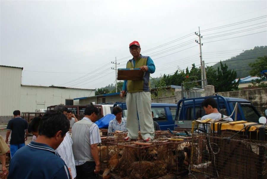 Illegal Dog Auction Market in Youngsanpo, Naju, Jeollanamdo.