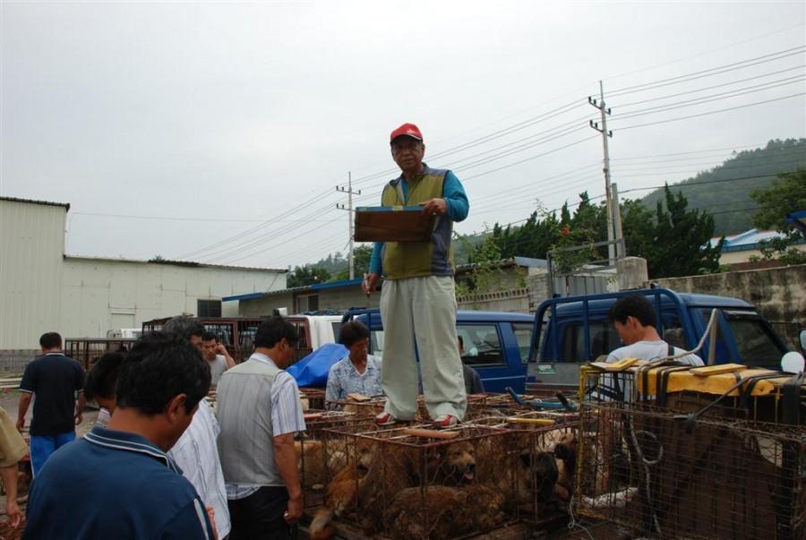 Illegal Dog Auction Market in Youngsanpo, Naju, Jeollanamdo.
