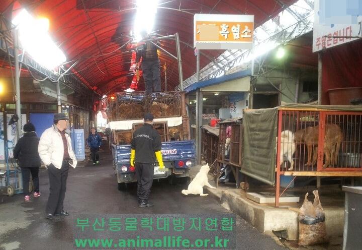 Busan Gupo_White Dog Hanging1_Cropped
