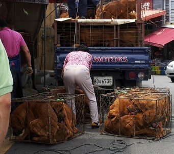 Busan Gupo Dog Meat Market