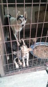 Dog Slaughterhouse in Gwangmyeong. CARE.