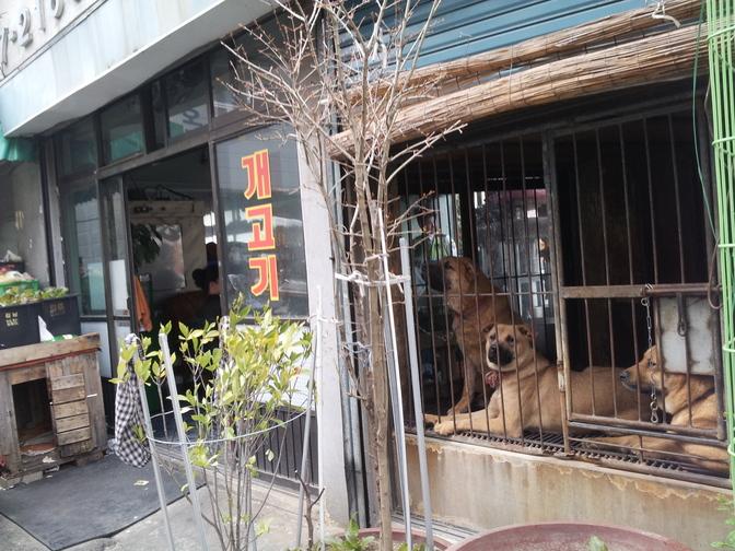 Busan Bupyeong Market, Samgak-jib Dog Meat shop/slaughterhouse.  부산부평시장 삼각집