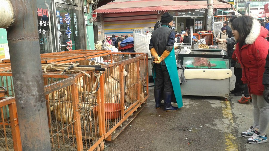 Seongnam Moran Dog Meat Market. 12/2014. Photo: Nami Kim. https://www.facebook.com/savekoreandogs