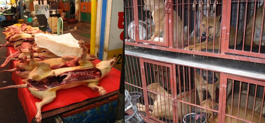 Daegu Chilseong Dog Meat Market, Gyeongsangbuk-do Province, South Korea