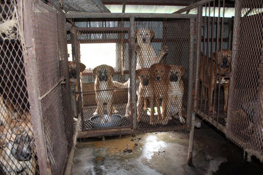 Dog farm in S. Korea.  Photo:  Nami Kim.  https://www.facebook.com/savekoreandogs