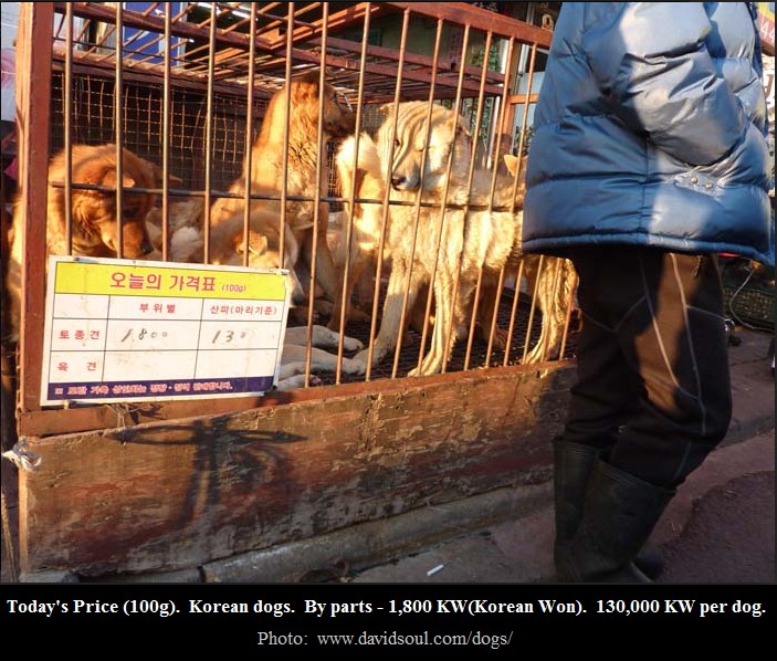 Seongnam Moran Dog Meat Market.  There are 30 of these despicable shops in this market alone!  The largest dog meat market in South Korea.