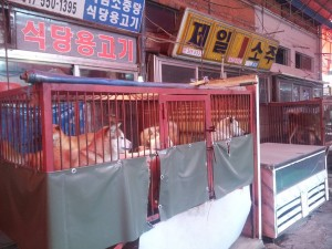 Gupo Dog Meat Market. Live puppies in display to be slaughtered and chopped up upon customer order.   Photo: Nami Kim.