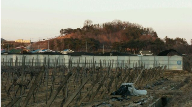 Gimcheon Dog farm