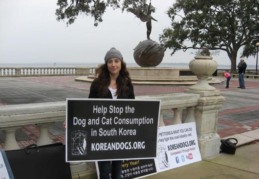 Amanda is one of the new members of the KoreanDogs.org Florida team. Her three-year-old daughter Madilyn and her friend Ashley also demonstrated against the extremely cruel dog and cat meat trade.