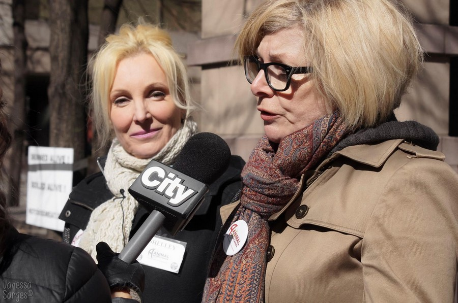 Member of Provincial Parliament (Ontario) Cheri DiNovo will be reading the petition to end dog and cat meat in Canada in the Legislation of Ontario.