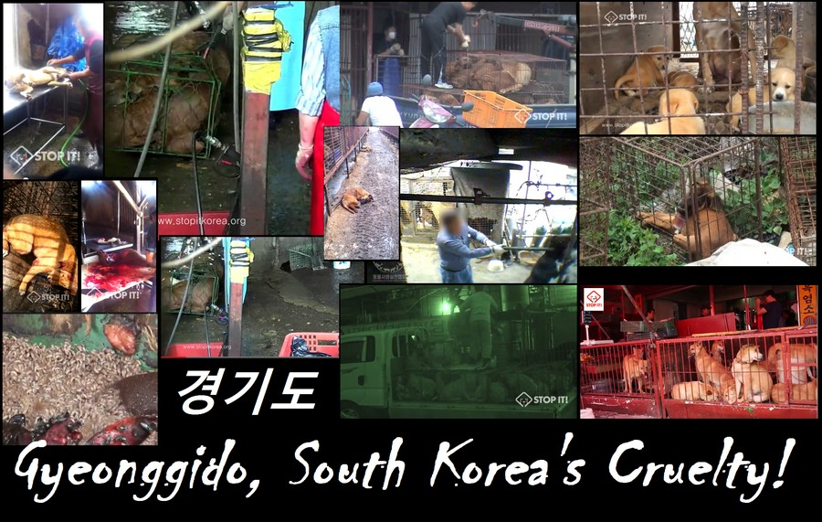 Gyeonggido, South Korea's Cruelty!