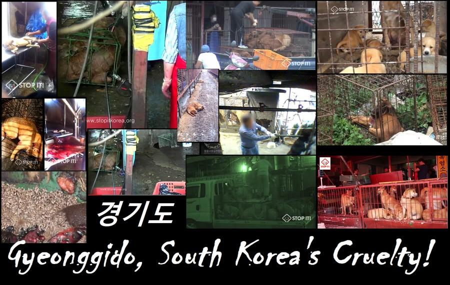 Gyeonggido, South Korea's Cruelty!
