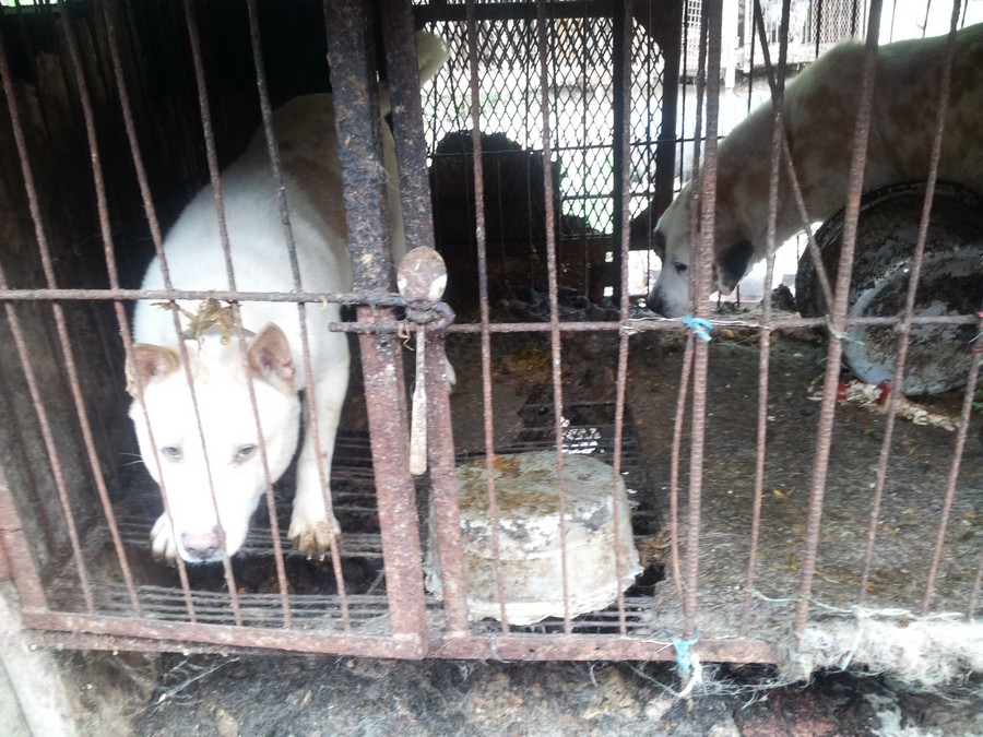 Dog farm/slaugherhouse in Yongdang, Yangsan, South Korea.  Photo:  Nami Kim.  https://www.facebook.com/savekoreandogs
