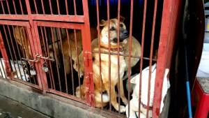 Gyeongdong Dog Meat Market, Seoul, South Korea.  June 6, 2015.  Photo:  SaveKoreanDogs.  https://www.facebook.com/koreandogs