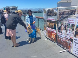 KoreanDogs.org_Fisherman's Wharf_060715_3