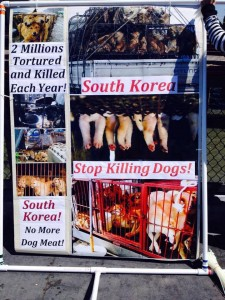 KoreanDogs.org_Fisherman's Wharf_060715_7