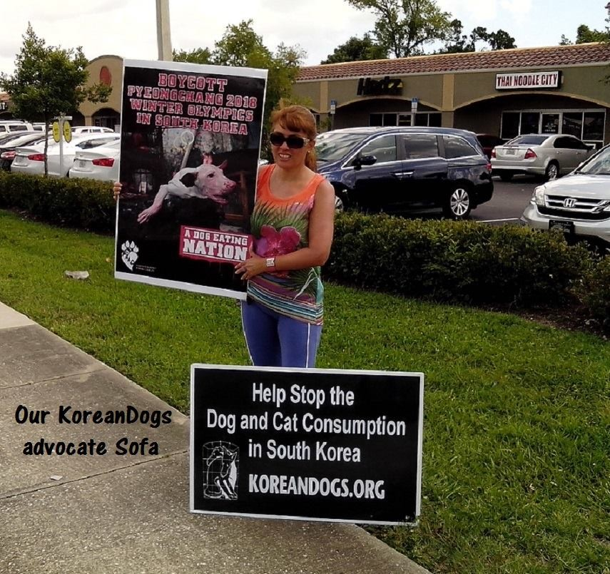 Sofa is one of the best members of our KoreanDogs.org Florida team. Thanks very much for your compassion, Sofa.