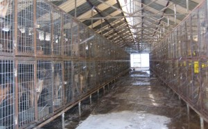 S. Korea's Large Scale Dog Meat Farm