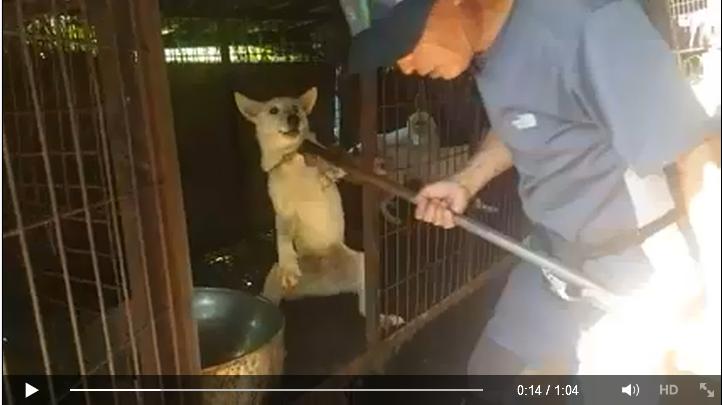 50 Dogs farm rescue_Video1
