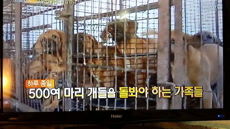 500 Dogs Dog farm_TV news