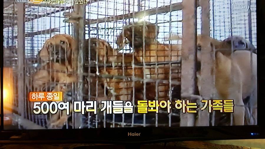 500 Dogs Dog farm_TV news