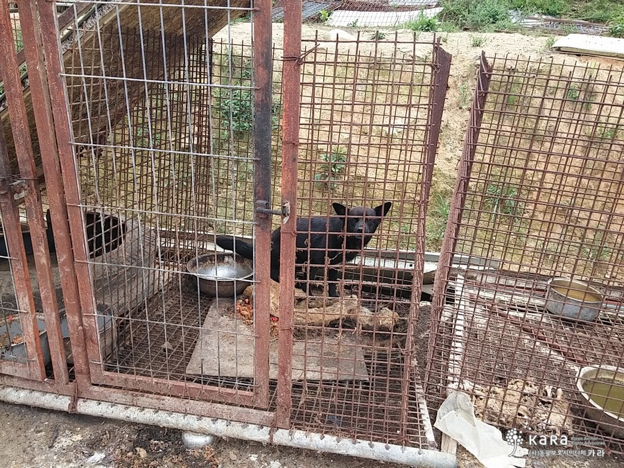 A live dog is left in the cage with the decomposing carcasses of a dead dog. There is no indication that proper food or water was ever provided to either dog.