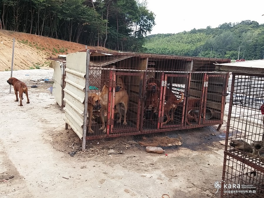 Some dogs have managed to escape the raised cages while others remain imprisoned in them.