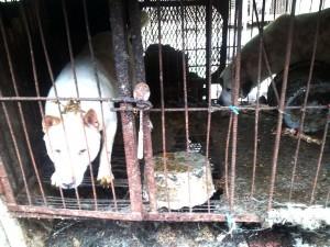 Yongdang, Yangsan, South Korea. Photo: SaveKoreanDogs.