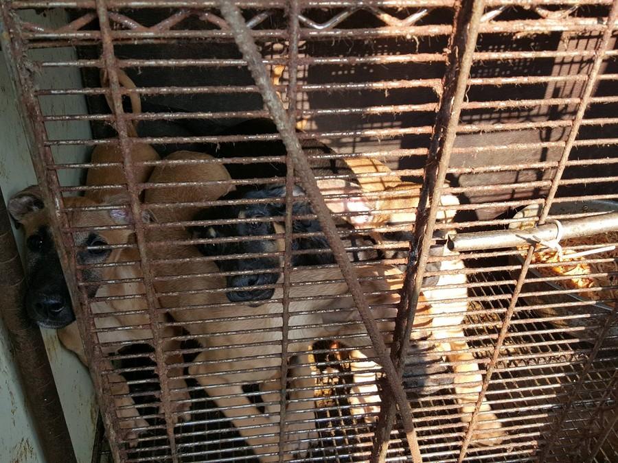 Dog farm in Ansan, South Korea.  Photo:  SaveKoreanDogs.