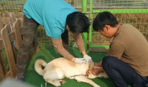 Dr. Jun visits for exam and vaccination_4