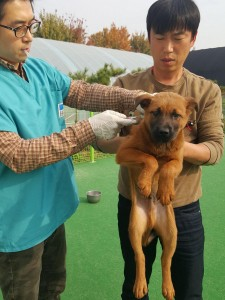 Dr. Jun visits for exam and vaccination_5