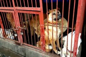 Seoul Gyeongdong Dog Meat Market where dogs are slaughtered while you wait.   Photo:  Nami Kim Team.