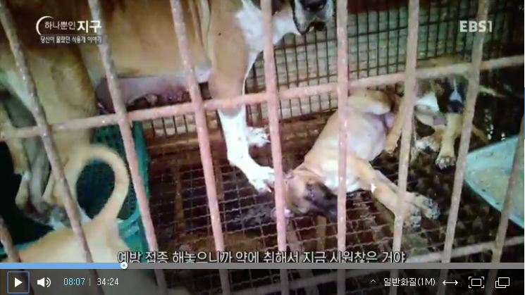 ebs-documentary_dog-meat-story_screenshot