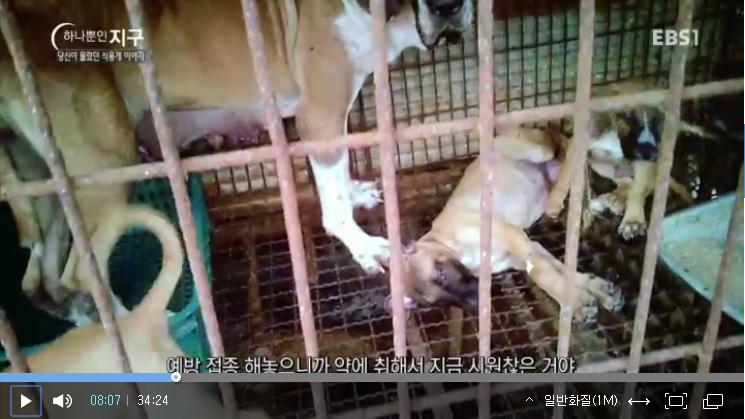 ebs-documentary_dog-meat-story_screenshot