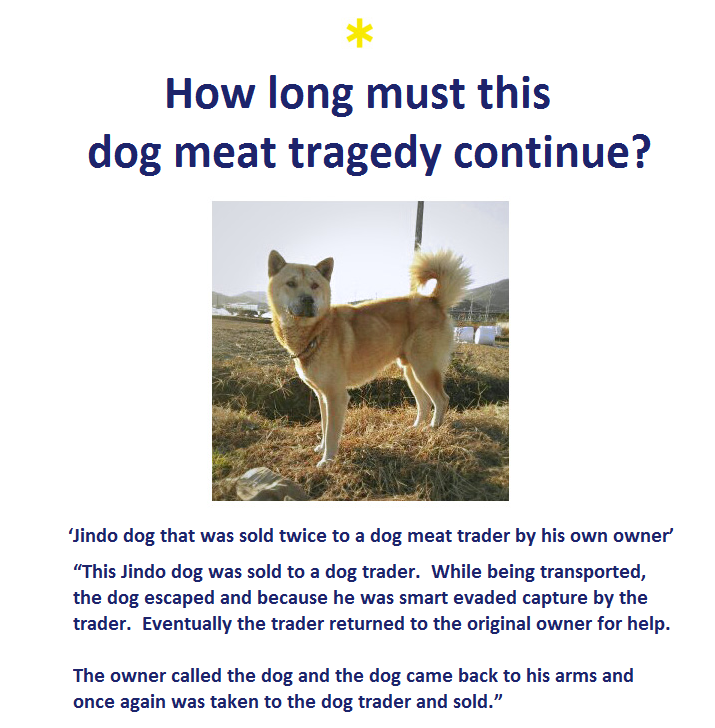 kara-dog-meat-law-graphic_1