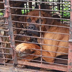 kara-dog-meat-law-graphic_2