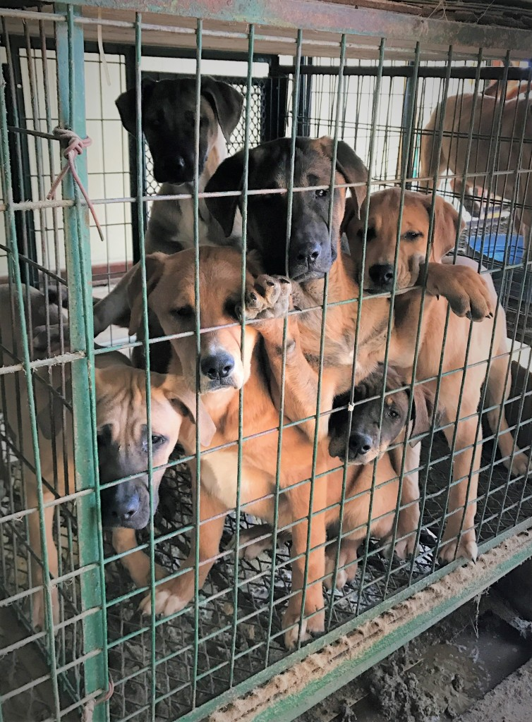 Dogs rescued from Junk yard
