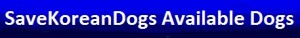 savekoreandogs-available-dogs