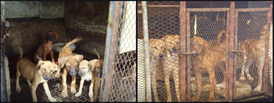 Photo:  Nara Dog Farm  in Miryang, Korea.  http://map.naver.com/local/siteview.nhn?code=12059229